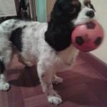 Ginevra appassionata di calcio!!